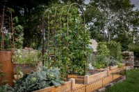 Kadai Growing Arch and Pea & Runner Bean Frames