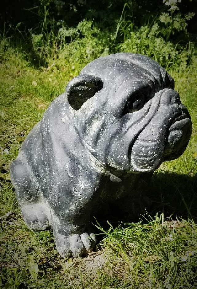 Bull Dog 24x32x31cm. Cast stone, weather proof and full of character.